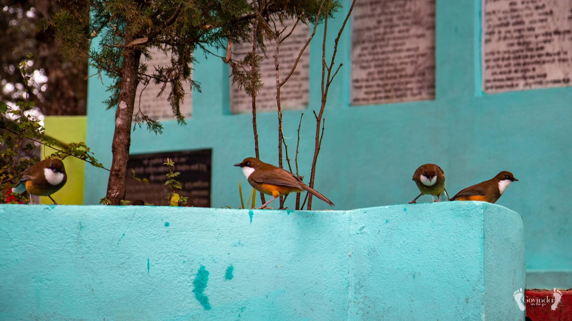 Birds at Shakti Peetha in Dunagiri