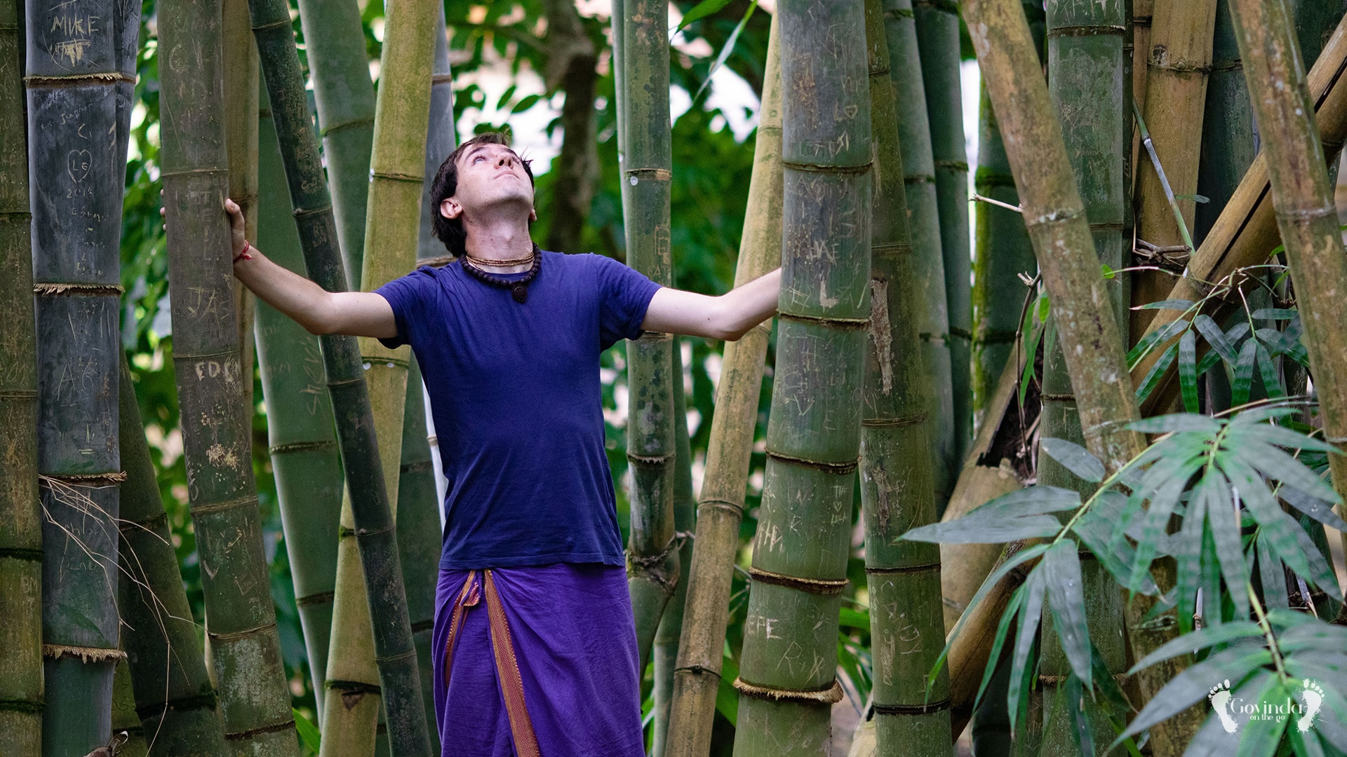 Bamboo trees in Botanical Garden Mauritius