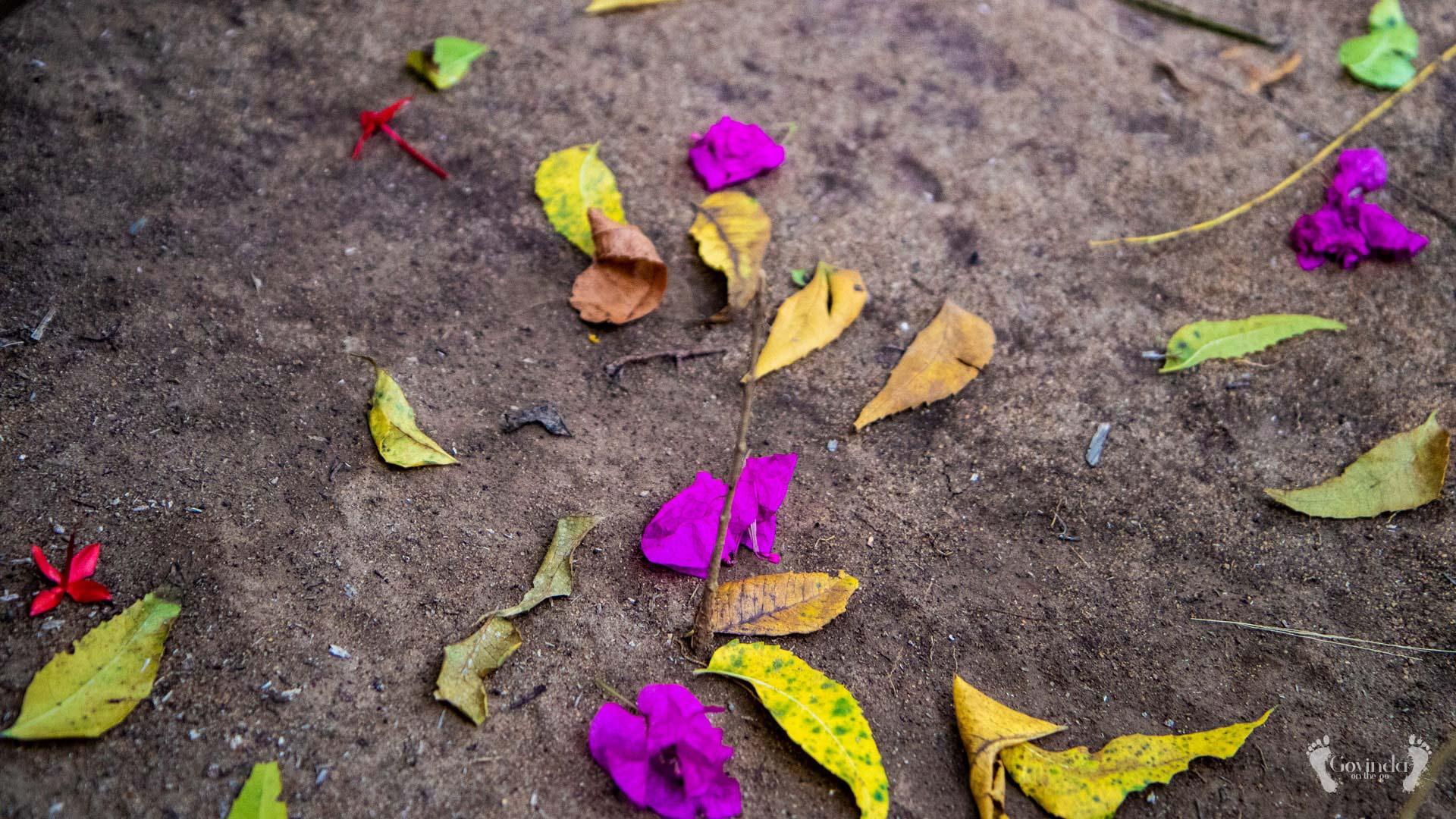 Colourful leafs