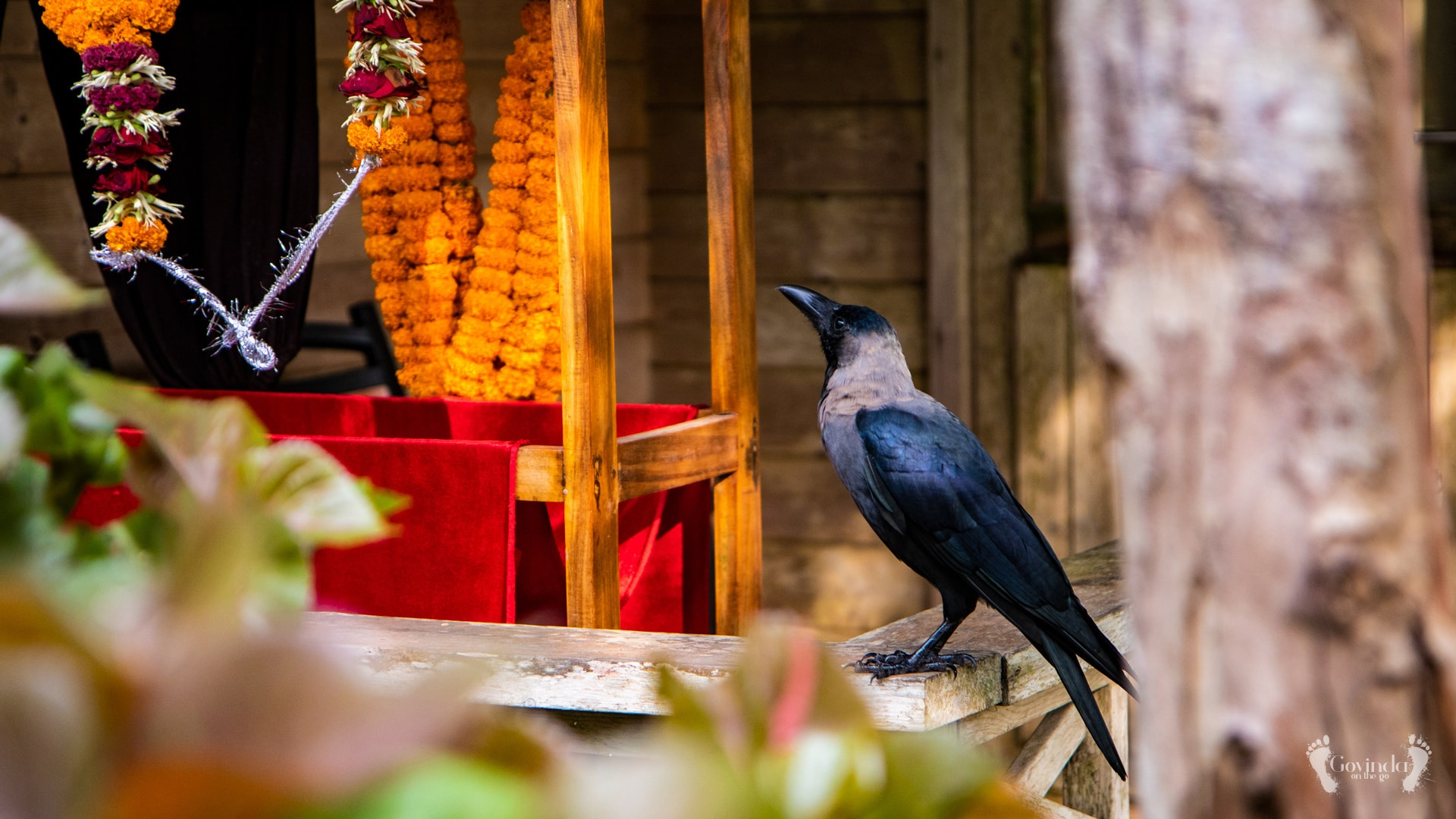 Crow looking at Guruji's flower garland