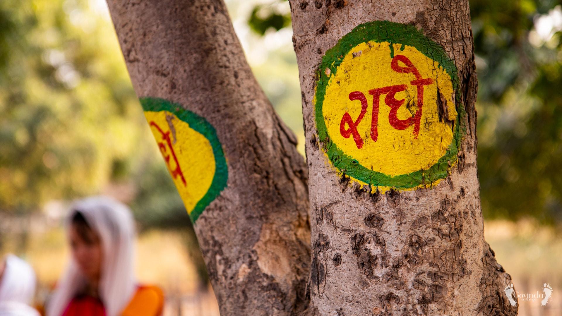 Radharani name stamped on tree at Govardhan hill
