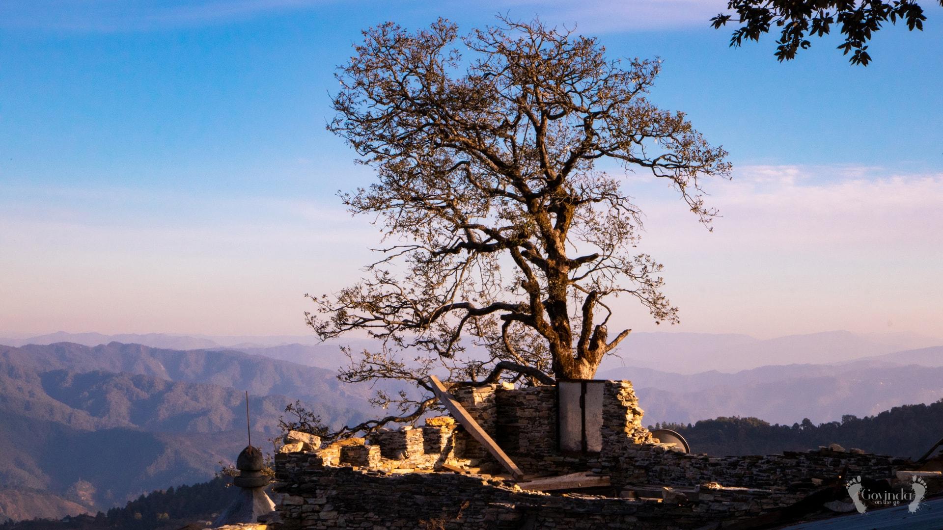 Tree at Ma Sukhadevi Mandir in Dunagiri
